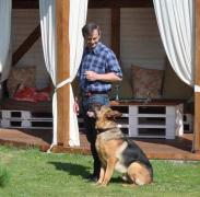 Dressirovannye dogs online consultat, correction Povedniki