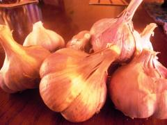 Garlic sell Seeds of garlic