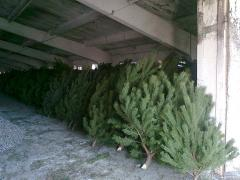 Offered for sale is a legitimate Christmas tree with chip wholesale