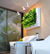 Pictures of living plants, vertical interior landscaping